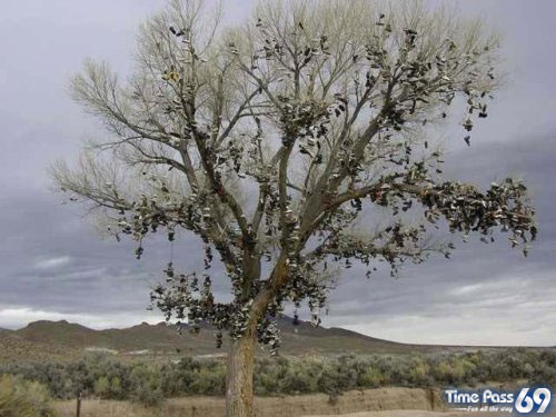 Amazing Shoe tree
