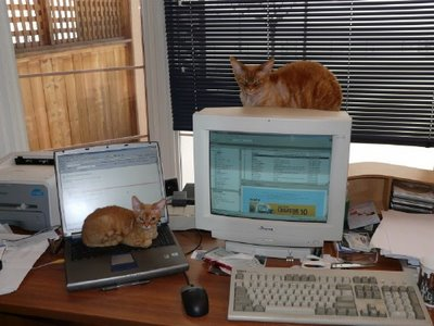 Beautiful Cats Working on Laptop Desktop