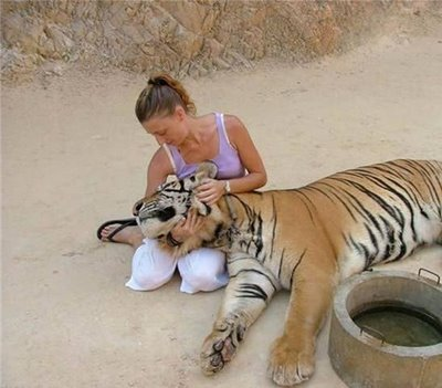 Friendly Tiger - Cute Friendship