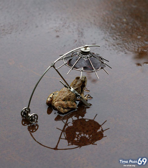 World First Flying Frog