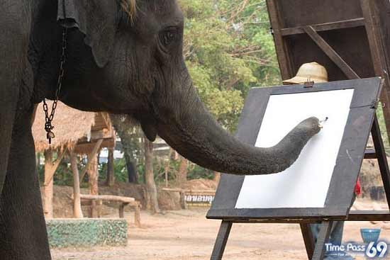 Elephant  Answer to Picasso