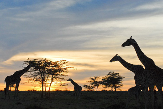 Amazing Photos of Kenya