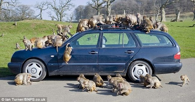 Dont Left the Car in a Safari Park