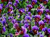 Amazing Purple Flowers Photography