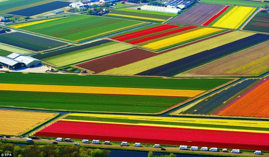 Most Spectacular Tulip Fields of the World