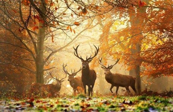 Amazing Autumn Photography Amazing autumn pictures Amazing  pictures of autumn