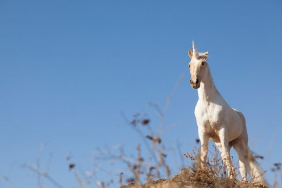 8 countries in the world that have a mythical national animal