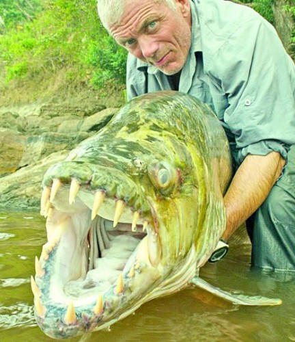 Worlds largest fishes found in river  Worlds largest fishes  Biggest fishes in the world