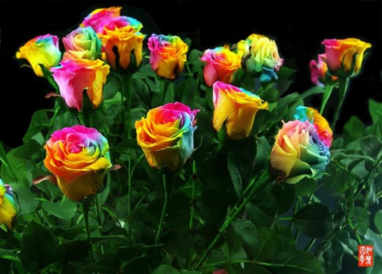Unique and Rare Rainbow Flowers
