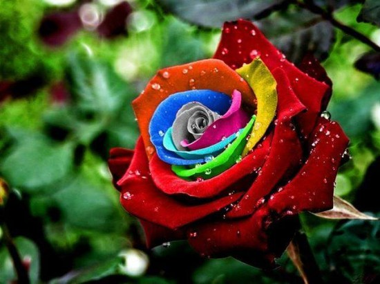 Unique and Rare Rainbow Flowers