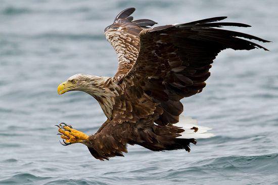 40 Beautiful Examples of Bird Photography
