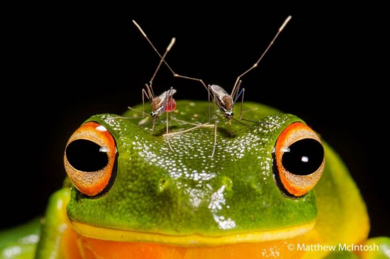 The Spectacular Winners Of The Nature Photographer Of The Year