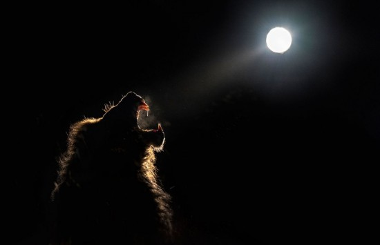 Wild animals gather under a full moon