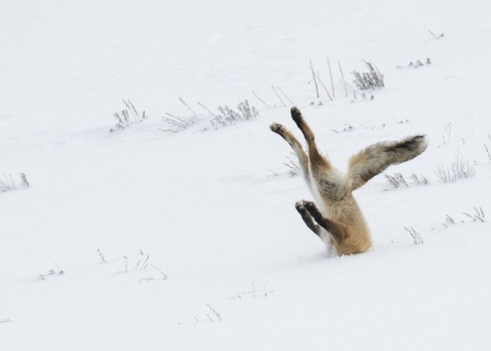 The incredible winners of the 2016 Comedy Wildlife Photography awards
