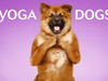 Yoga Dogs for 2010
