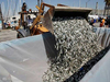 Mass Fish Death in California after Tsunami in Japan